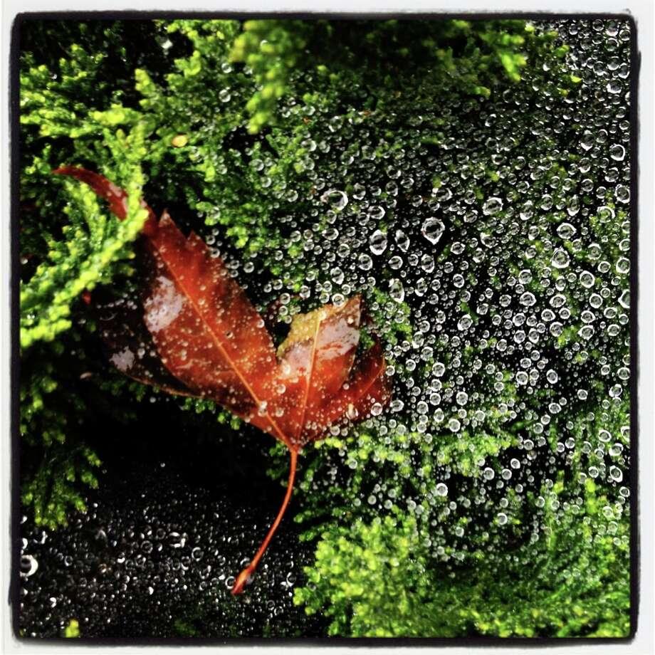 Morning dew drops.-Paul Chinn @sfchronphotos Photo: Paul Chinn, The Chronicle / SFC