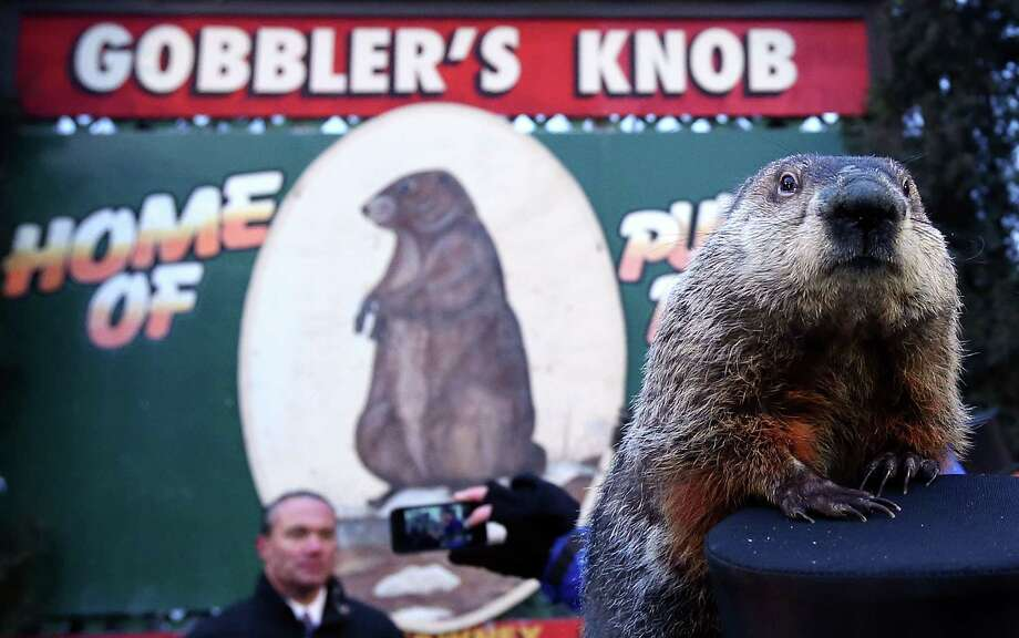 PUNXSUTAWNEY, PA - FEBRUARY 02:  Groundhog Punxsutawney Phil climbs on the top hat of his handler after Phil did not see his shadow and predicting an early spring during the 127th Groundhog Day Celebration at Gobbler's Knob on February 2, 2013 in Punxsutawney, Pennsylvania. The Punxsutawney 'Inner Circle' claimed that there were about 35,000 people gathered at the event to watch Phil's annual forecast. Photo: Alex Wong, Getty Images / 2013 Getty Images