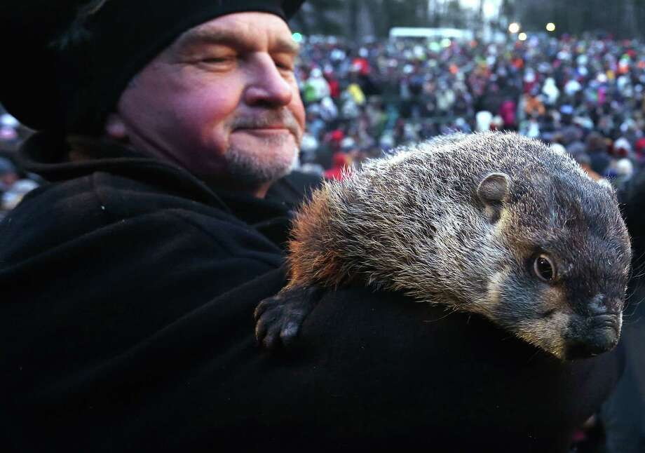 PUNXSUTAWNEY, PA - FEBRUARY 02:  Groundhog co-handler John Griffiths holds Punxsutawney Phil after Phil did not see his shadow and predicting an early spring during the 127th Groundhog Day Celebration at Gobbler's Knob on February 2, 2013 in Punxsutawney, Pennsylvania. The Punxsutawney 'Inner Circle' claimed that there were about 35,000 people gathered at the event to watch Phil's annual forecast. Photo: Alex Wong, Getty Images / 2013 Getty Images