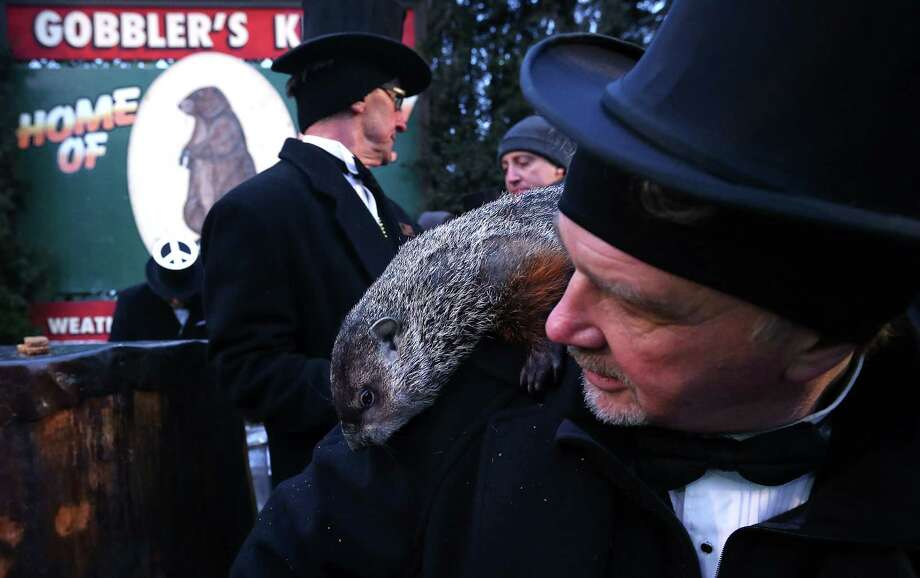 PUNXSUTAWNEY, PA - FEBRUARY 02:  Punxsutawney Phil climbs on the shoulder of groundhog co-handler John Griffiths (R) after Phil did not see his shadow and predicting an early spring during the 127th Groundhog Day Celebration at Gobbler's Knob on February 2, 2013 in Punxsutawney, Pennsylvania. The Punxsutawney 'Inner Circle' claimed that there were about 35,000 people gathered at the event to watch Phil's annual forecast. Photo: Alex Wong, Getty Images / 2013 Getty Images