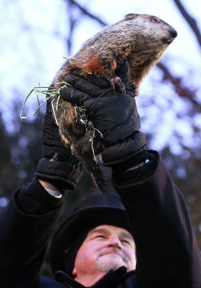 PUNXSUTAWNEY, PA - FEBRUARY 02:  Groundhog co-handler John Griffiths holds up Punxsutawney Phil after Phil didn't see his shadow and predicting an early spring during the 127th Groundhog Day Celebration at Gobbler's Knob on February 2, 2013 in Punxsutawney, Pennsylvania. The Punxsutawney 'Inner Circle' claimed that there were about 35,000 people gathered at the event to watch Phil's annual forecast. Photo: Alex Wong, Getty Images / 2013 Getty Images