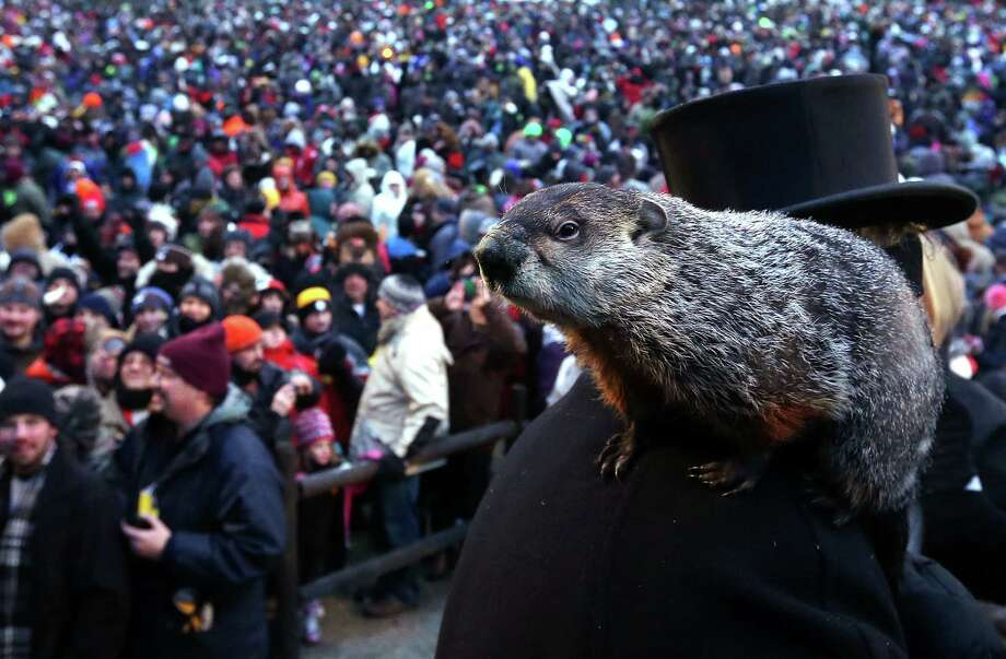 PUNXSUTAWNEY, PA - FEBRUARY 02:  Punxsutawney Phil climbs on the shoulder of groundhog co-handler John Griffiths after Phil didn't see his shadow and predicting an early spring during the 127th Groundhog Day Celebration at Gobbler's Knob on February 2, 2013 in Punxsutawney, Pennsylvania. The Punxsutawney 'Inner Circle' claimed that there were about 35,000 people gathered at the event to watch Phil's annual forecast. Photo: Alex Wong, Getty Images / 2013 Getty Images