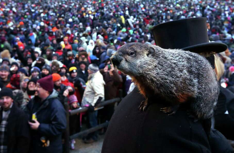 PUNXSUTAWNEY, PA - FEBRUARY 02:  Punxsutawney Phil climbs on the shoulder of groundhog co-handler Jo