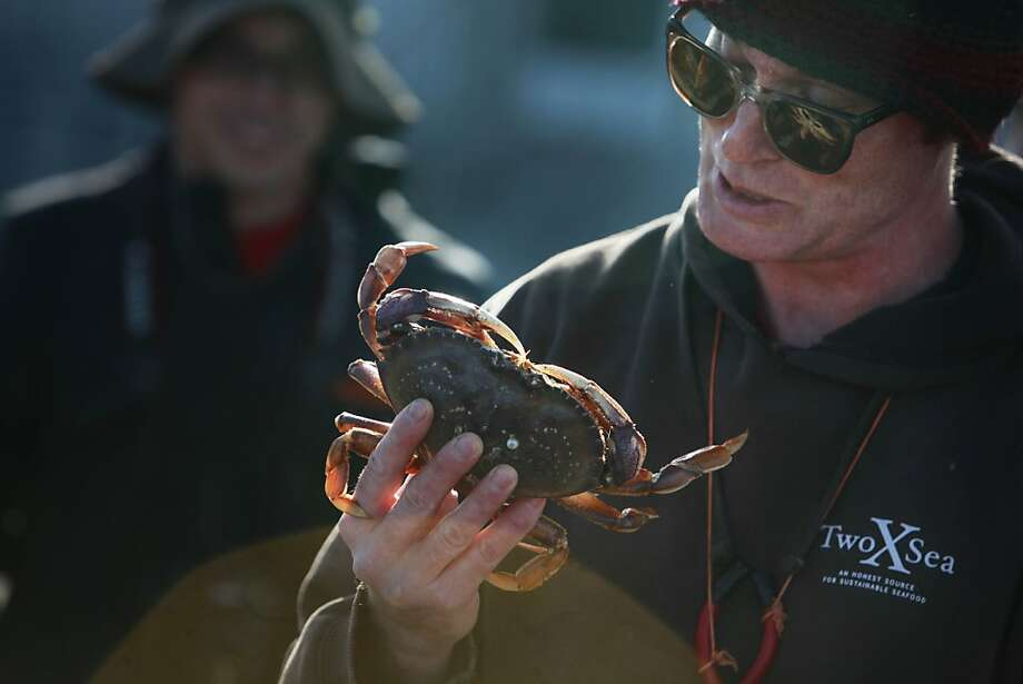 Kirk Lombard teaches an urban coastal foraging class at S.F.'s St. Francis jetty. Photo: Lea Suzuki, The Chronicle