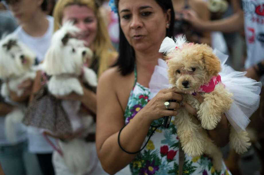 People parade with their dogs during the animals carnival, in Copacabana beach in Rio de Janeiro on Monday. AFP PHOTO / CHRISTOPHE SIMON Photo: CHRISTOPHE SIMON, Getty / 2013 AFP
