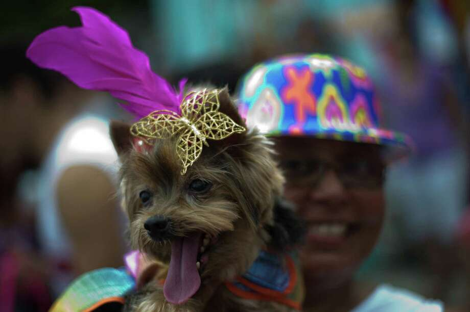 A dog wearing carnival costume takes part in the animals carnival, in Copacabana beach in Rio de Janeiro on Monday. AFP PHOTO / CHRISTOPHE SIMON Photo: CHRISTOPHE SIMON, Getty / 2013 AFP