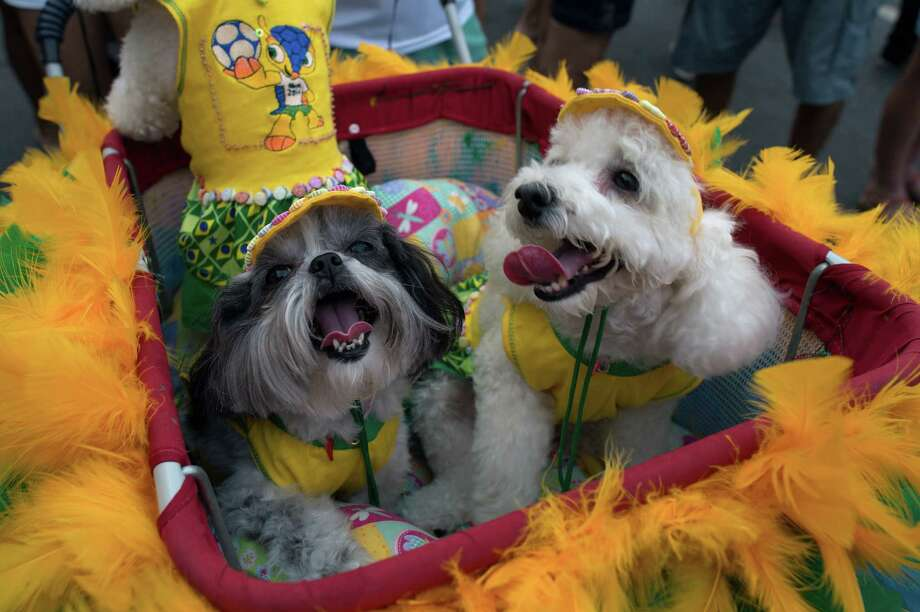 Dogs wearing carnival costume take part in the animals' carnival, in Copacabana beach in Rio de Janeiro on Monday. AFP PHOTO / CHRISTOPHE SIMON Photo: CHRISTOPHE SIMON, Getty / 2013 AFP