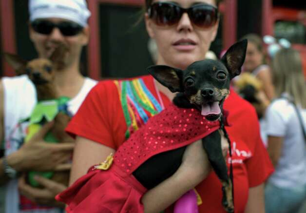 A woman poses with her fancy dressed dog during the animals' carnival, in Copacabana beach in Rio de Janeiro on Monday. AFP PHOTO / CHRISTOPHE SIMON Photo: CHRISTOPHE SIMON, Getty / 2013 AFP