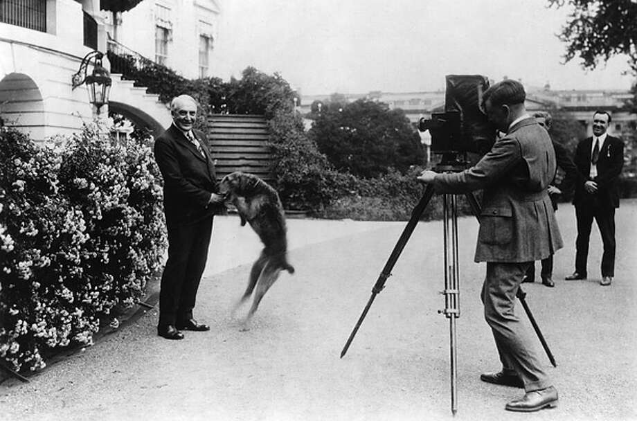 Warren Harding's closest friends mired him in scandal, but his Airedale was always loyal.