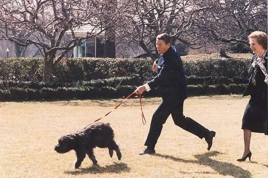Ronald Reagan's dog Lucky was so rambunctious -- here dragging the president and Margaret Thatcher around the White House grounds -- that he was banished.