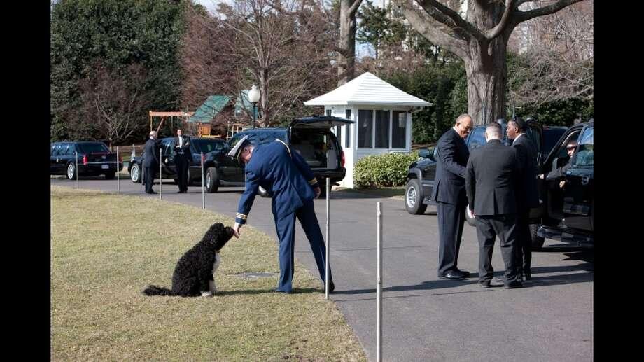 Bo on a leash.