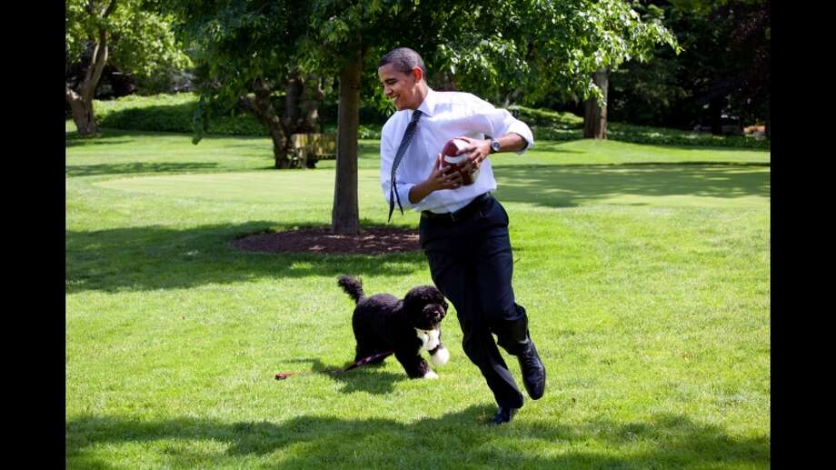 Bo plays ball with President Obama.