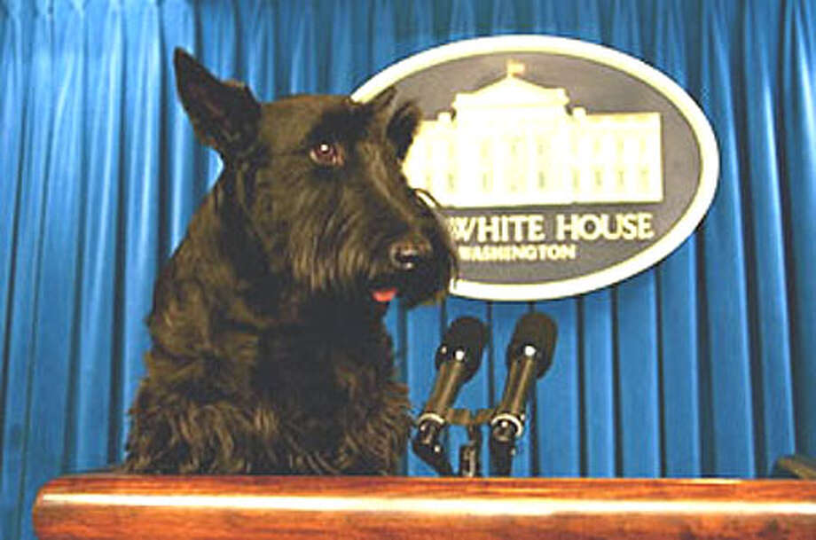 Barney in the White House briefing room