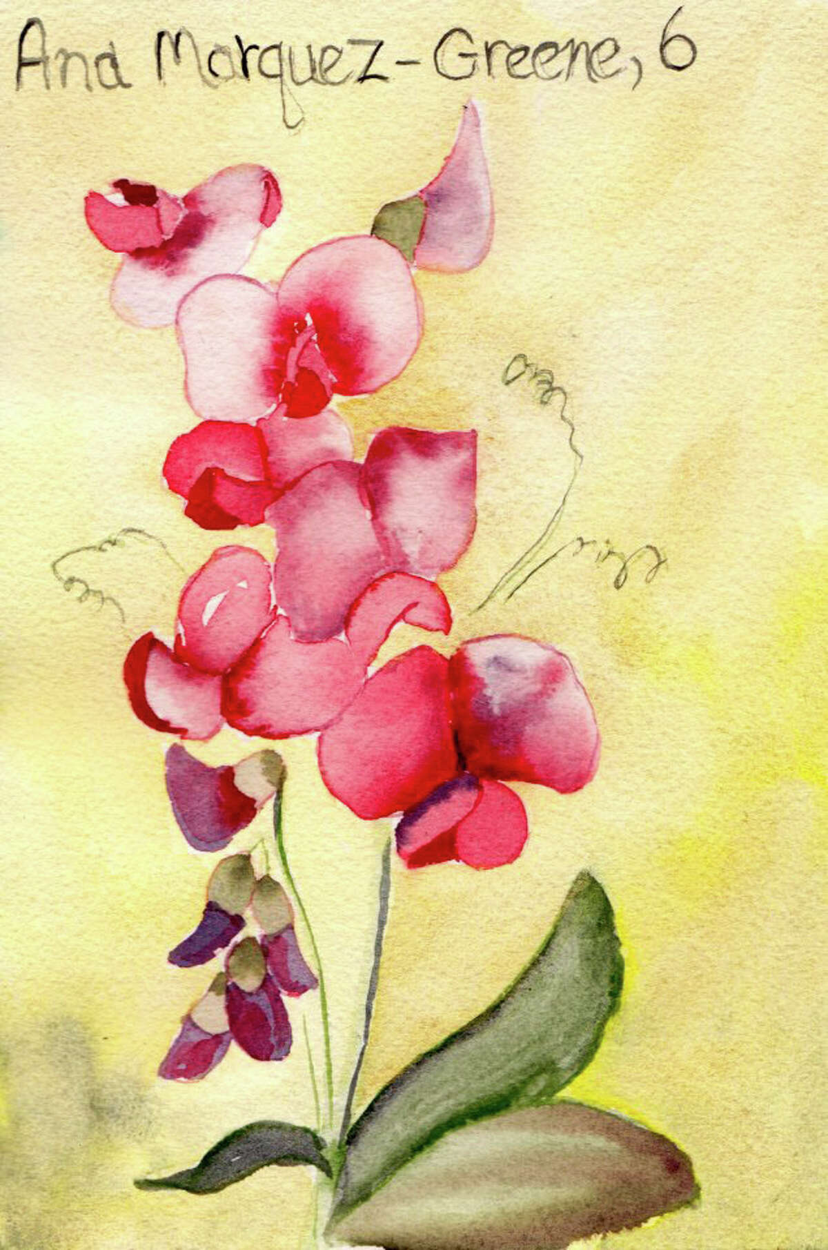 Painting for Sandy Hook victim Ana Marquez-Greene, age 6, by Pamela Hollinde, a substitute art teacher at Greenville Elementary. Hollinde created 26 watercolor flower paintings as a way to memorialize the victims of Sandy Hook in Newtown, Conn. She sent the paints down to Newtown this this week. (Pamela Hollinde)