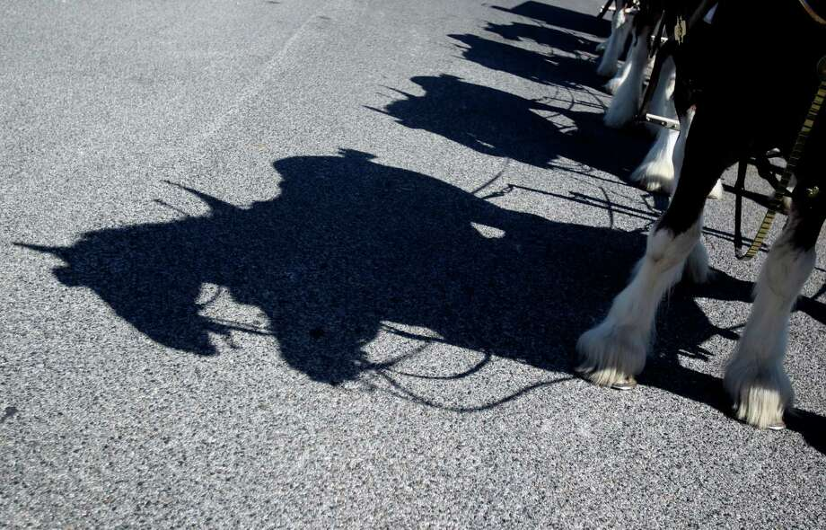 Football fan xxx won a special visit from the Budweiser Clydesdales to his/her Super Bowl Party on Sunday, Feb. 3, 2013, in Galveston.  Greg Koch, Green Bay Packers and Sports Talk 790 host, and Adam Wexler accompany horses on delivery. Photo: Mayra Beltran, Houston Chronicle / © 2013 Houston Chronicle