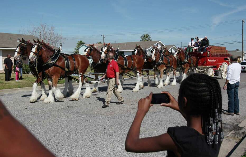 Mariah Brown, 10, views the Budweiser Clydesdales on their way to visit a radio winner at his Super