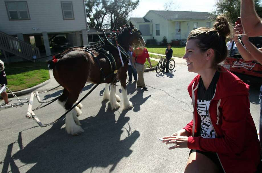Shannon Guillot-Wright smiles as the Budweiser Clydesdales arrive for a special visit to her friends' Super Bowl Party on Sunday, Feb. 3, 2013, in Galveston. Photo: Mayra Beltran, Houston Chronicle / © 2013 Houston Chronicle