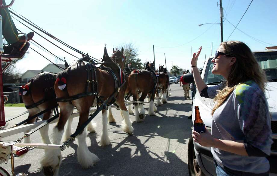 Meredith Franklin waves good-bye to the Budweiser Clydesdales as they depart Ed Drozdik's Super Bowl Party on Sunday, Feb. 3, 2013, in Galveston.  Ed Drozdik was gifted pizza and Budweiser beer for his Super Bowl party. Photo: Mayra Beltran, Houston Chronicle / © 2013 Houston Chronicle