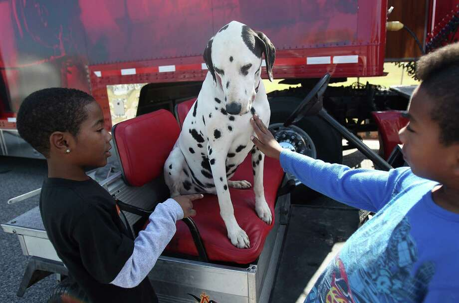 "Michael Brown, 8, and Maurice Vallier, 8, pet ''Brady"", the Budweiser Dalmation Dog, as staff prepare the Budweiser Clydesdales for a special visit to the Super Bowl Party of a radio winner on Sunday, Feb. 3, 2013, in Galveston. Photo: Mayra Beltran, Houston Chronicle / © 2013 Houston Chronicle"