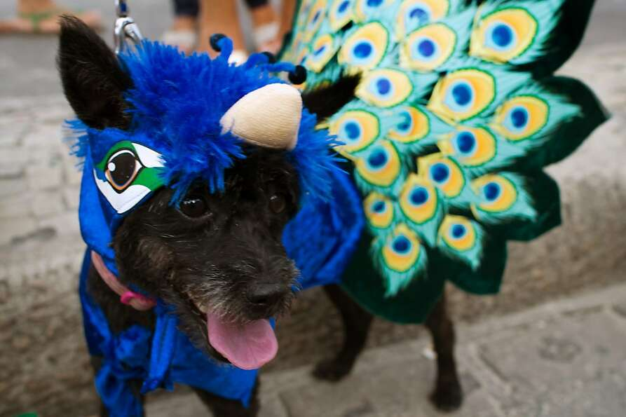 Must be one of those peacockapoos: A costumed canine marches in the animals carnival at Rio's