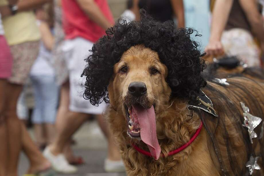 Loved the Deion Sanders 'Sandcastle' ad: A retriever goes incognito at Rio's Blocao dog carnival. Photo: Silvia Izquierdo, Associated Press