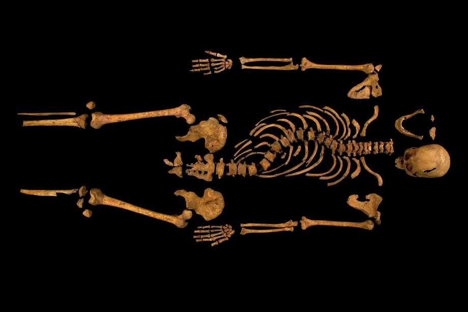 An undated handout photo of the skeleton believed to be King Richard III. In one of Britain's most dramatic modern archaeological finds, researchers announced on Monday that skeletal remains found under a parking lot in Leicester, England were those of King Richard III, paving the way for a possible reassessment of his brief but violent reign. (University of Leicester via The New York Times) -- NO SALES; FOR EDITORIAL USE ONLY WITH STORY SLUGGED RICHARDIII SKELETON. ALL OTHER USE PROHIBITED. -- Photo: UNIVERSITY OF LEICESTER, New York Times / UNIVERSITY OF LEICESTER