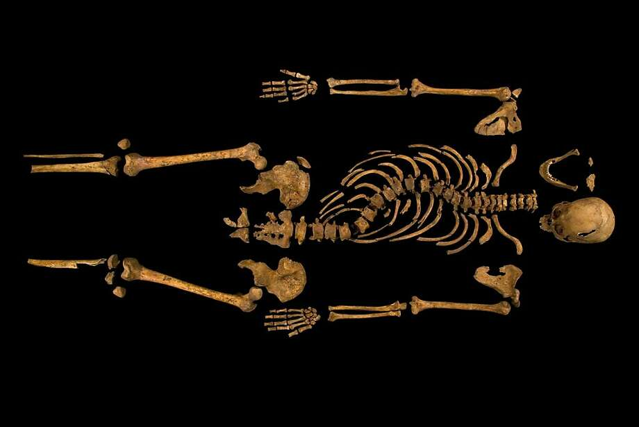 Researchers have announced that DNA tests confirm the skeletal remains found under a parking lot in Leicester, England, as Richard III, who died more than 500 years ago. Photo: University Of Leicester, New York Times