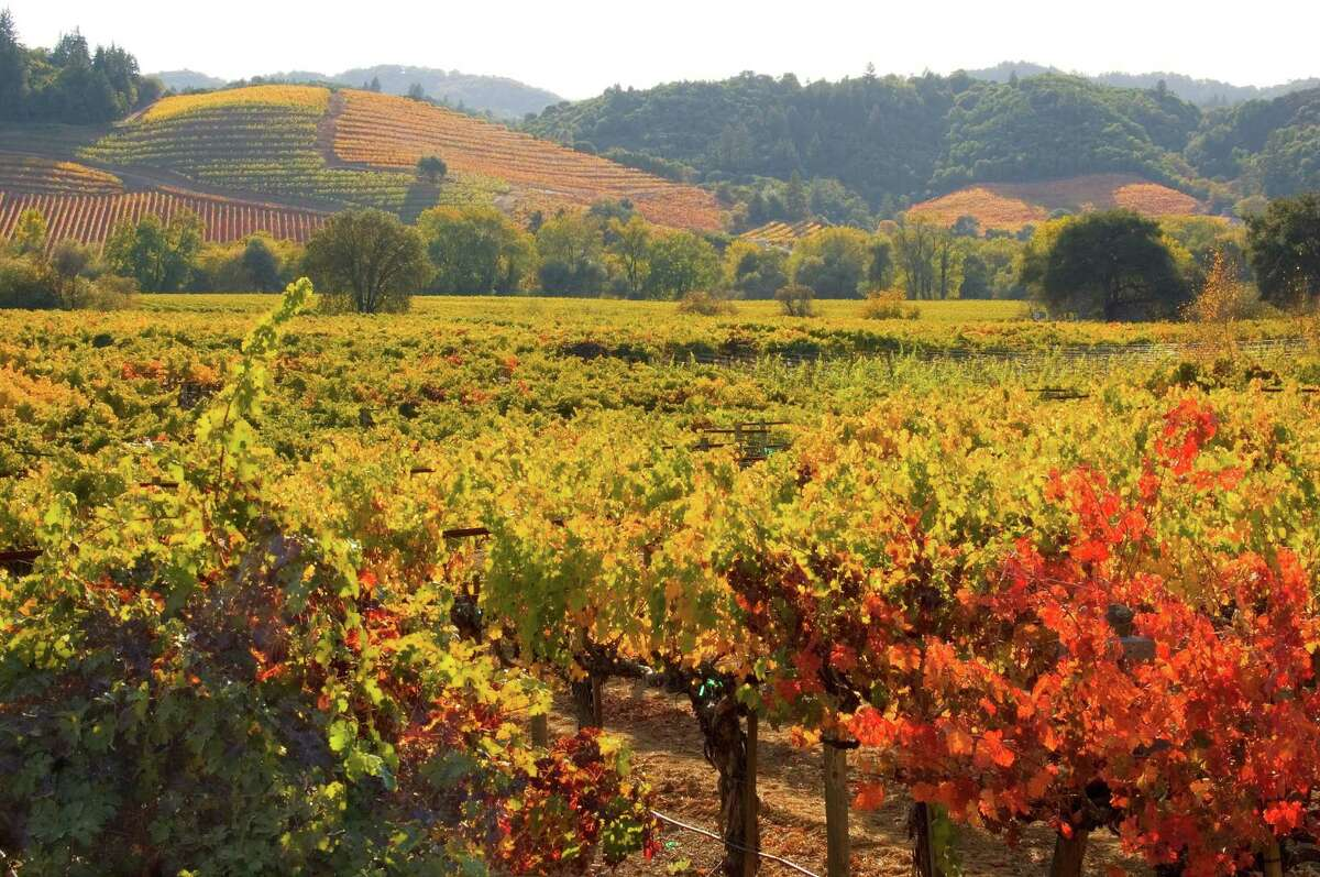 Grapevines bring autumn color to the hills at Dutcher Crossing Winery.