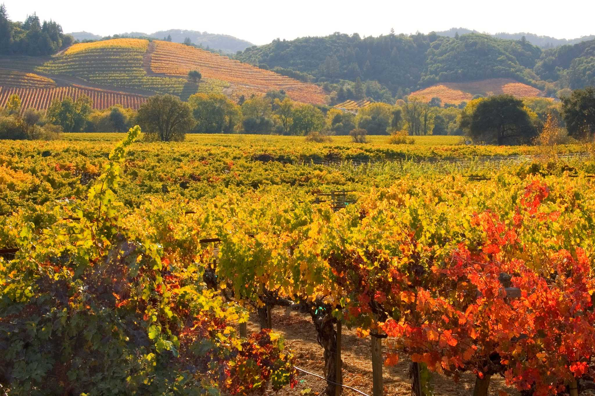 Couple Find A Bucolic Getaway In Sonoma County San