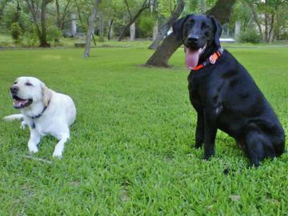 Mr Rigby and Rory ready for the morning run. Beautiful... Perry tweeted last June.
