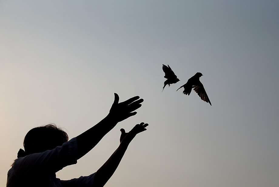 A woman releases sparrows as an offering to mourn Cambodia's former King Norodom Sihanouk in Phnom Penh, Monday, Feb. 4, 2013. Sihanouk's body had been lying in state at the Royal Palace after being flown from Beijing where he died Oct. 15 of a heart attack at the age of 89. The cremation, the climax of seven days of mourning, will take place Monday. Photo: Wong Maye-E, Associated Press