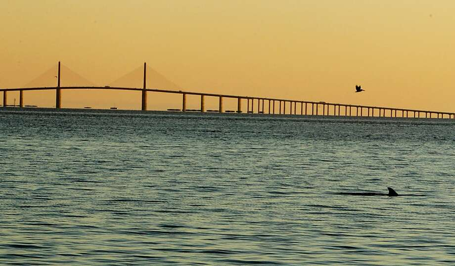 The sun sets over the Sunshine Skyway Bridge as a dolphin surfaces off the pier at Bay Vista Park in St. Petersburg, Fla., Monday evening, Feb. 4, 2013. Photo: Shadd, Dirk, Associated Press