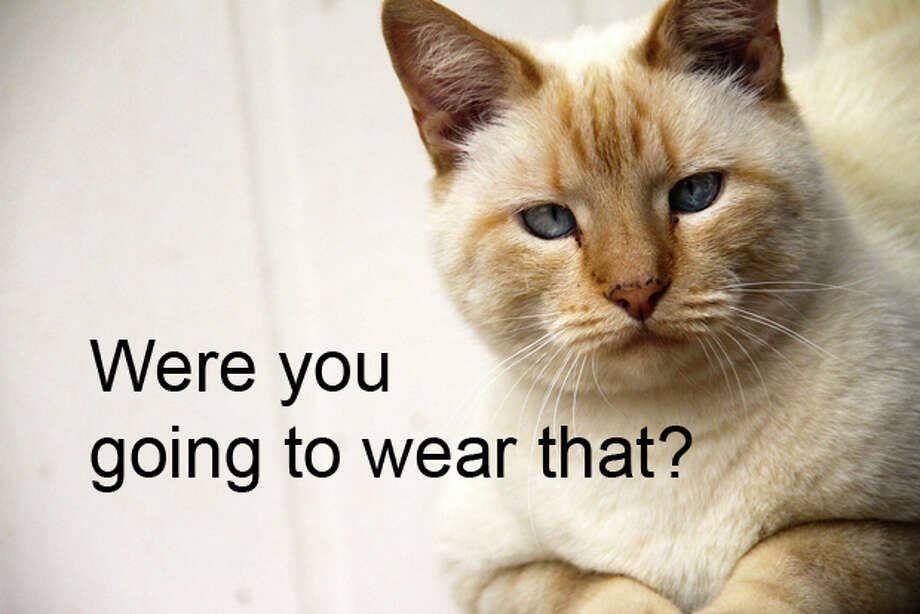 What cats think. (Cat photo by Martie Swart/Flickr) Photo: PI