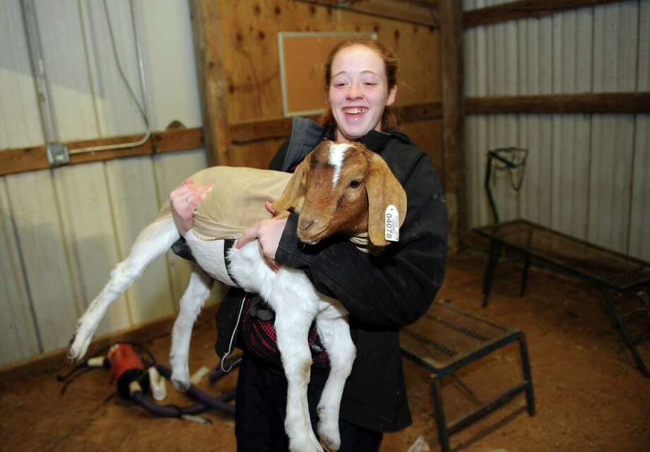"Stratford High School senior Megan Stele has raised  ""Adonis"" through the Spring Branch FFA program. Animals in the program will be presented for auction this week at the Spring Branch FFA Livestock Project Show & Sale. Photo: Thomas Nguyen, Freelance / Freelance"