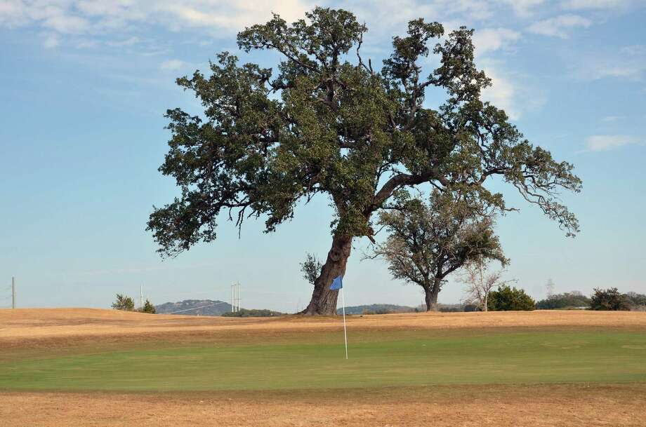 Native oak trees, such as this one on the right of the No. 1 green, are scattered throughout the layout at The Buckhorn Golf Course in Comfort. Photo: Photos By LeAnna Kosub / San Antonio Express-News