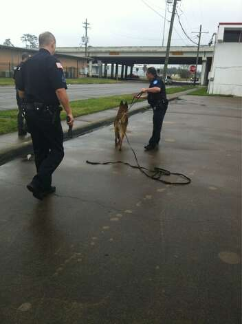 Beaumont police officers use a K-9 to help track a suspected bank robber Wednesday morning. Ioanna Makris/The Enterprise