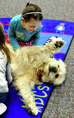 "Alexis McInerney, 4, pets Bocker during a visit to the C.H. Booth Library in Newtown Saturday, Feb.2, 2013. Bocker is featured in books, has his own facebook page, and has been in movies such as ""Men in Black 3"" and ""Eat, Pray, Love."" The event was part of national Take Your Child to the Library Day. Photo: Michael Duffy / The News-Times"