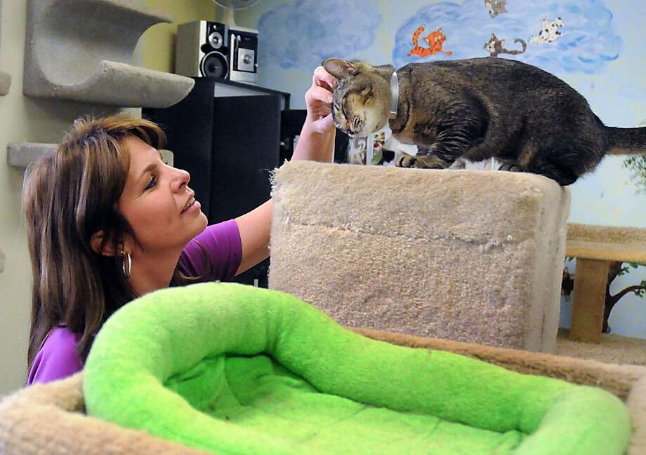 You can almost hear the purr: Amy Holifield gives a kitty a head scratch in the feline play room at the Montgomery County Animal Shelter in Conroe, Texas. Holifield is the president of Care Corporation, which has operated the shelter for almost a year. Photo: David Hopper, For The Houston Chronicle