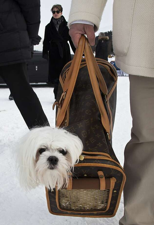 Don't worry. He only bites poor people:A portable pooch rides in style in a Louis Vuitton bag at a horse racing event in St. Moritz. Photo: Boris Heger, AFP/Getty Images