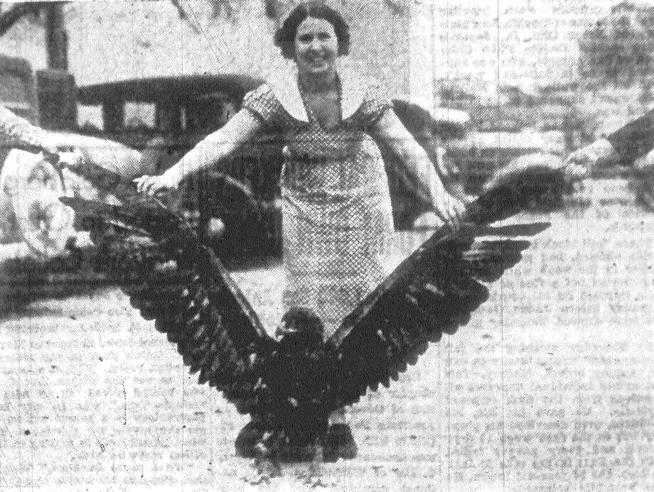 Most powerful of all birds, this Golden Eagle will not be able to kill any more lambs, his favorite prey. Mrs. L.V. Wallace of Barksdale shows how impossible it is to reach from wing-tip to wing-tip, which measures more than nine feet. This Golden Eagle was trapped by Wallace, after it killed between 50 and 75 lambs on his ranch in Uvalde County this season. Wallace, once postmaster at Vance, has been a subscriber to the San Antonio Express for 40 years. Published in the San Antonio Express Feb. 20, 1938. Photo: File Photo