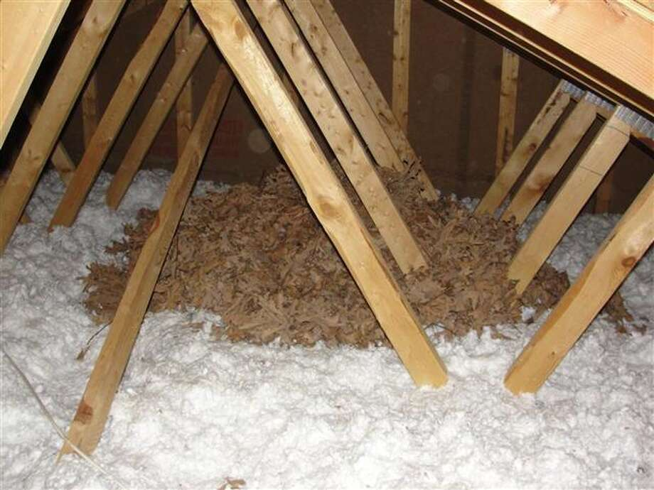 Too bad leaves don't work as insulation. Photo via Zillow Blog.