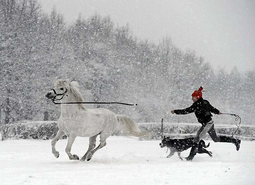 Dog and pony snow: A Polish girl walks her pets on a snowy day in Warsaw.