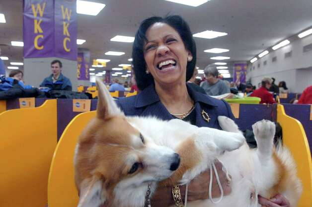 Stamford resident Donna Gilbert celebrates with her Welsh Corgi, Reggie, at the Westminster Kennel Club dog show in 2010. Gilbert will not be competing in this year's event, set for Feb. 11 to 12, 2013, in New York City, but she does plan on attending. She said it is a good opportunity for anyone to learn more about the many breeds that participate each year. Photo: Helen Neafsey, File Photo / Greenwich Time