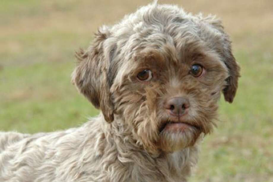 Tonik the dog is up for adoption at http://www.petfinder.com/petdetail/20932637-Tonik-Poodle-Dog-Mishawaka-IN