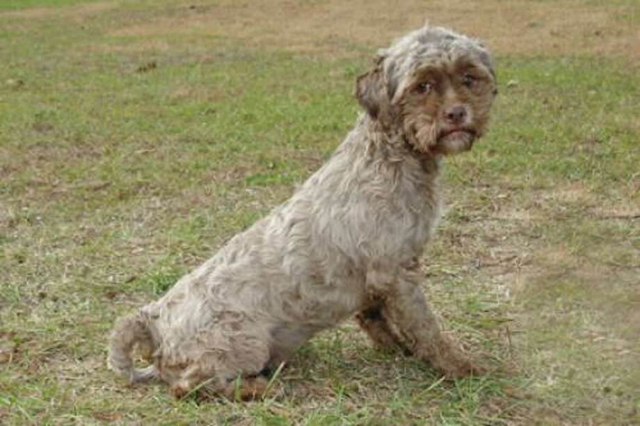 Tonik the dog is up for adoption at http://www.petfinder.com/petdetail/20932637-Tonik-Poodle-Dog-Mishawaka-IN