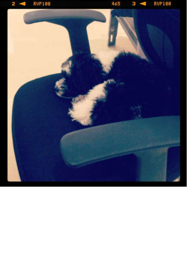 """Meet the real boss of the office, Bird, asleep on the job."" Photo: Courtesy Of Wes Gordon"