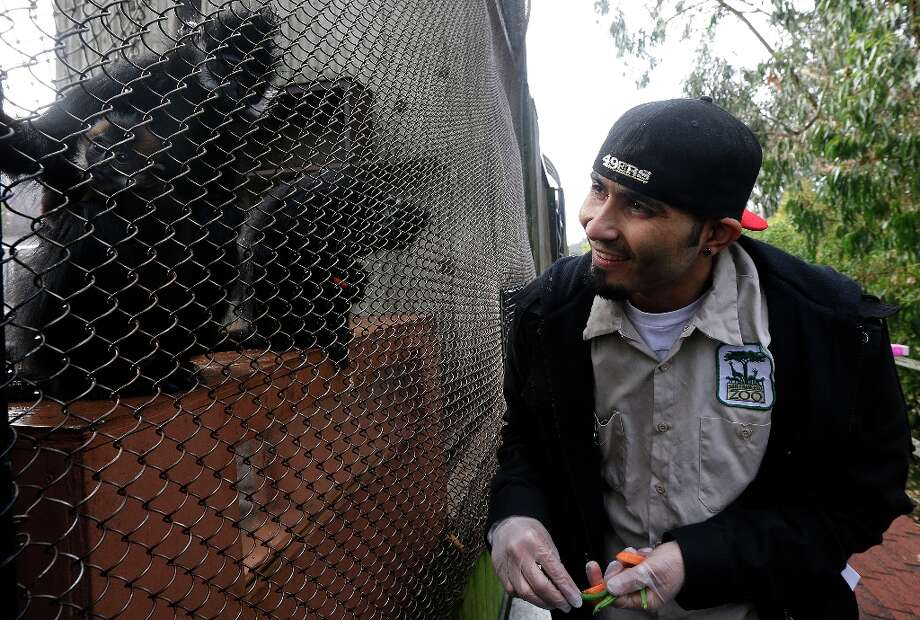 San Francisco Giants pitcher Sergio Romo looks at a langur monkey, left, named after him at the San Francisco Zoo in San Francisco, Thursday, Feb. 7, 2013. The four-month old female langur monkey, born during the Giants' National League Divisional Series against the Cincinnati Reds, was named Sergio Romo after the Giants won baseball's World Series. Photo: Jeff Chiu, Associated Press / AP