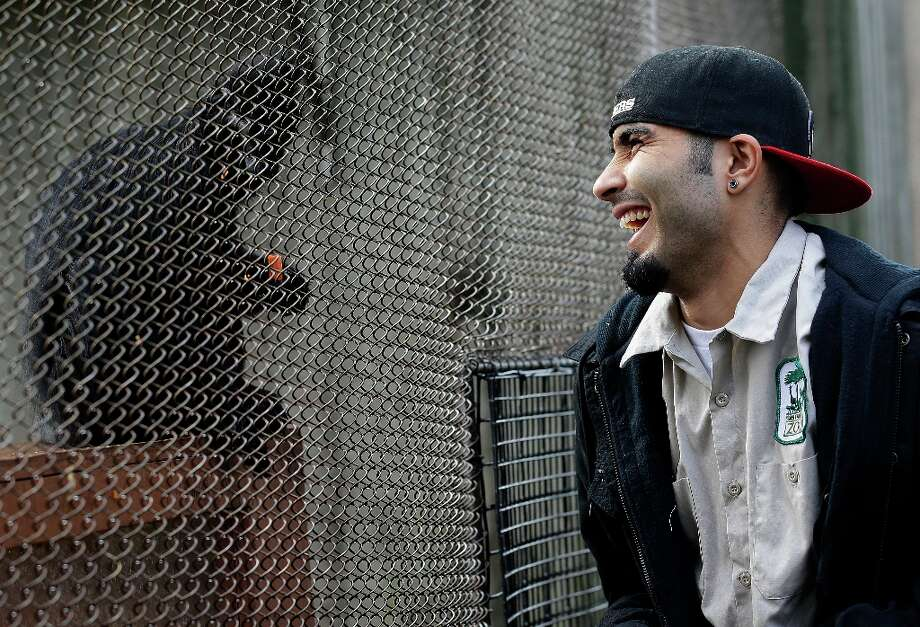 San Francisco Giants pitcher Sergio Romo laughs as he feeds langur monkeys at the San Francisco Zoo in San Francisco, Thursday, Feb. 7, 2013. A four-month old female langur monkey, born during the Giants' National League Divisional Series against the Cincinnati Reds, was named Sergio Romo after the Giants won baseball's World Series. Photo: Jeff Chiu, Associated Press / AP