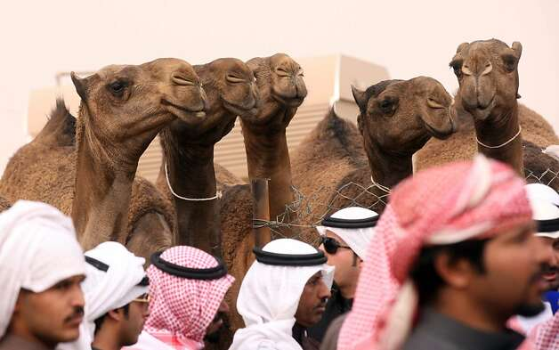 Kuwaiti men stand near camels during a competition in al-Salmi district, a desert area 120 kms west of Kuwait City, on February 7, 2013, held as part of the ongoing Popular Heritage Festival. The one-month event is held annually to commemorate popular activities in Kuwaiti heritage, featuring camel races, falcons contests, fishing competitions and others. Photo: Yasser Al-zayyat, AFP/Getty Images