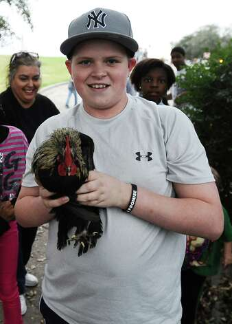Twelve year old Trevor Kimbell, from Bridge City, holds the courir parade chicken he dug out from the bushes in front of the Rose Hill Manor on Thursday, February 7,2013, in Port Arthur. Photo taken: Randy Edwards/The Enterprise Photo: Randy Edwards